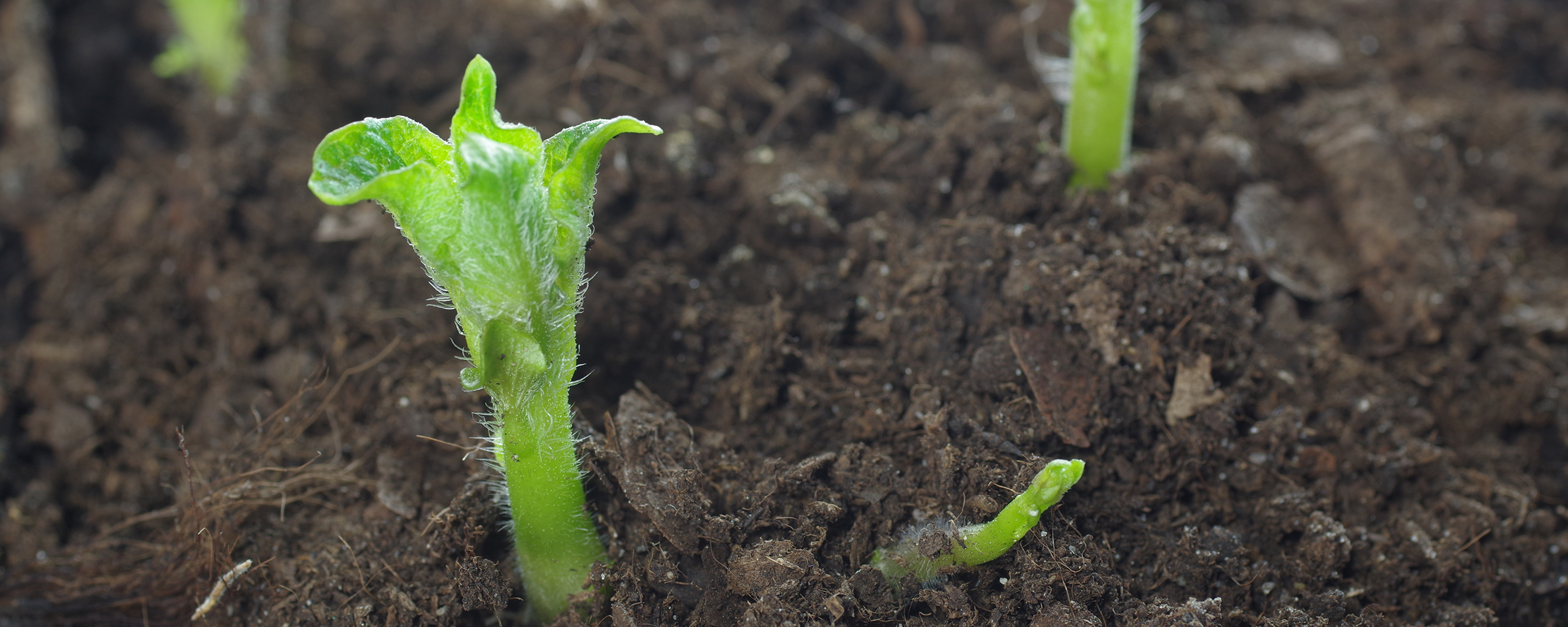 When It Comes to Improving Soil Health on Your Farm, Set Your Sights on the Long-Term Goals