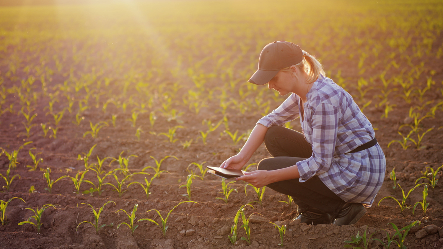 Why Vertical Crop Monitoring is Essential to Regenerative Agriculture